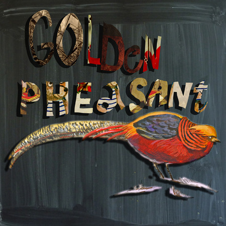 joyous life: An hand painted illustration (bird) and mixed media (alphabet and blackboard) illustration (blackboard is slightly blurred). BIRD - - GOLDEN PHEASANT