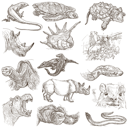 lizard: ANIMALS around the World - Collection of an hand drawn illustrations. Description: Full sized hand drawn illustrations, original freehand sketches. Drawing on white background.