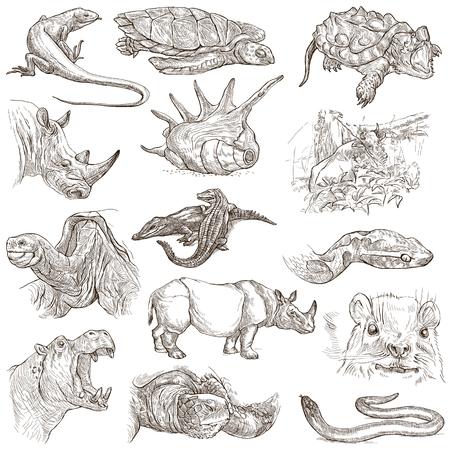 jaszczurka: ZWIERZĘTA na całym świecie - Kolekcja ręką rysowane ilustracje. Opis: Pełna wielkości ręcznie rysowane ilustracje, szkice odręczne oryginalne. Opierając się na białym tle.