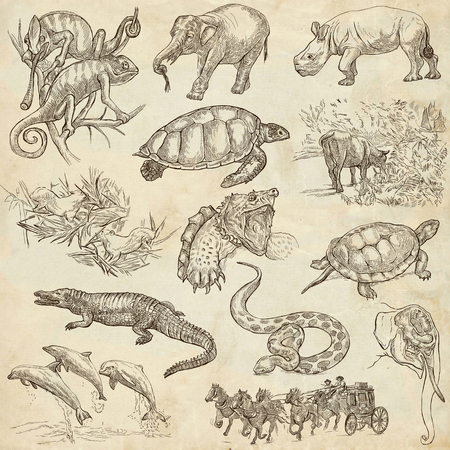 draft horse: ANIMALS around the World - Collection of an hand drawn illustrations. Description: Full sized hand drawn illustrations, original freehand sketches. Drawing on old paper.