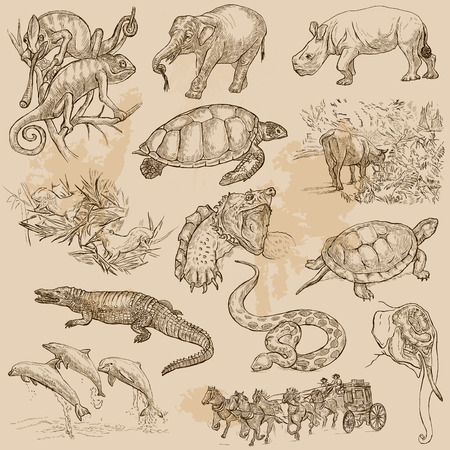 draft: ANIMALS around the World. Collection of an hand drawn vector illustrations. Freehand sketches, Line art. Each drawing comprise of a few layers of lines. Colored background is isolated. Easy editable. Illustration