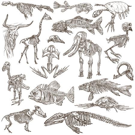-手描きイラストのコレクションの異なる動物の頭蓋骨と骨。フルサイズの手描きイラスト、オリジナル、フリーハンド スケッチでは、白の背景上に
