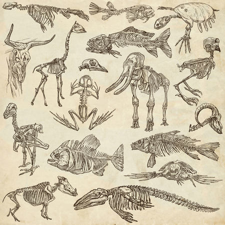 sea goat: Bones and Skulls of different Animals - Collection of an hand drawn illustrations. Full sized hand drawn illustrations, Originals, freehand sketching, drawing on paper background.