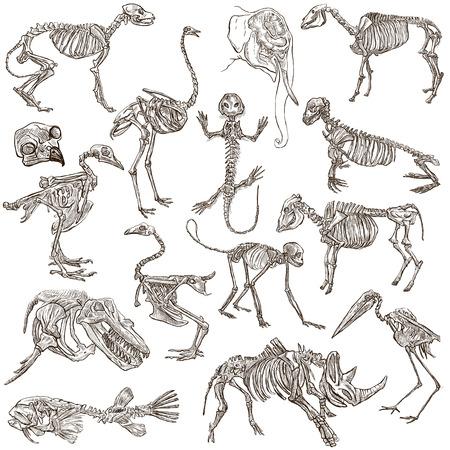Knochen Und Schädel Von Verschiedenen Tieren - Erhebung Einer Hand ...