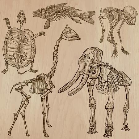esqueleto: HUESOS, esqueletos y cráneos de algunos animales. Colección de una dibujados a mano ilustraciones de vectores. Dibujo a mano alzada. Cada dibujo comprenden unas pocas capas de líneas. El fondo es aislado. Editable en grupos. Vectores