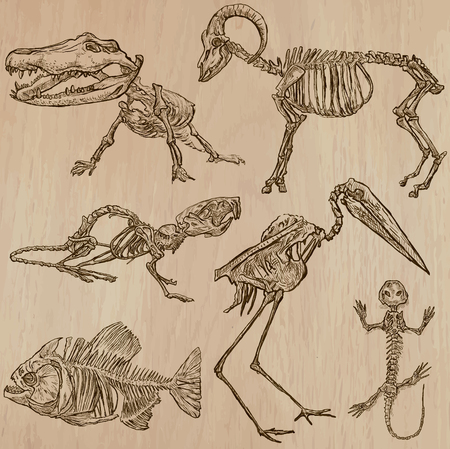 BONES, SKELETONS and Skulls of some Animals. Collection of an hand drawn vector illustrations. Freehand sketching. Each drawing comprise a few layers of lines. Background is isolated. Editable in groups.