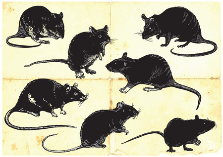 comix: Rats, mouses collection, pack. Freehand sketching in comic, comix style. Editable by animals, groups and layers. Drawing on old paper, yellow paper is in the bottom layer.