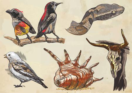 Une collection dessinée à la main, ANIMAUX. - Description des vecteurs de couleur, croquis à main levée. Modifiable en couches et les groupes. Le fond est isolé. Les animaux sont nommés à l'intérieur du pack vecteur.
