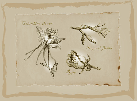 An hand drawn pack, Blossoms and Flowers. Description - Vectors, Freehand sketching. Background is isolated.