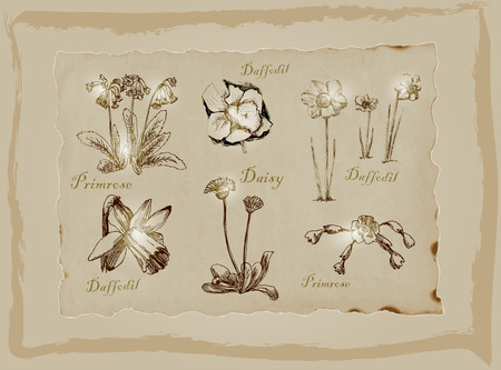 primrose: An hand drawn pack, Blossoms and Flowers. Description - Vectors, Freehand sketching. Background is isolated.