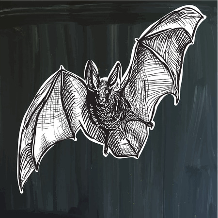 bestiary: An hand drawn vector - the bat, flying bat