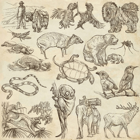 sized: ANIMALS around the World - pack, collection - Collection of an hand drawn illustrations. Description, Full sized hand drawn illustrations (freehand sketches). Drawings on old paper.