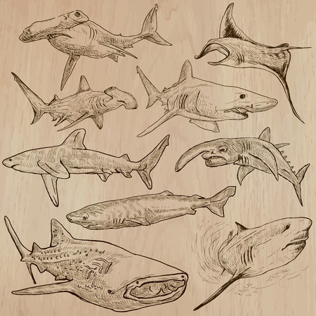 chordata: Animals - SHARKS, Chordata. Description - Hand drawn vectors, freehand sketching. Editable in layers and groups. Colored background is isolated.