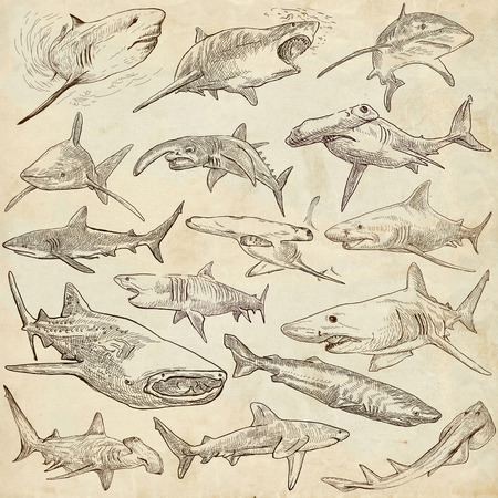 chordata: Animals, SHARKS, Chordata. Collection of an hand drawn illustrations. Description, Full sized hand drawn illustrations - freehand sketches. Drawings on old paper.