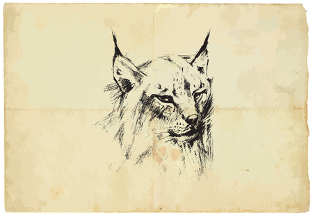 converted: An hand drawn illustration of LYNX - Eurasian Lynx - converted into vector picture. Background, old paper, is isolated. Illustration