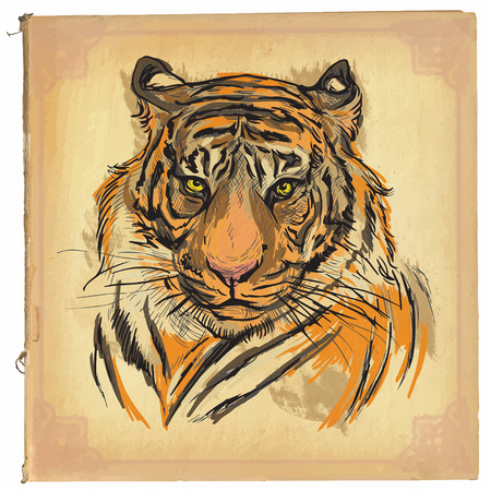 classical arts: An hand drawn retro illustration, colored line art. Freehand sketch of Tiger head.Hand drawing is editable in layers and groups.Background is isolated.Vintage processing on old paper background