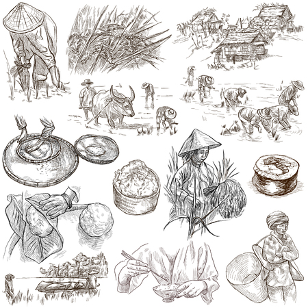 rice harvest: Rice.Agriculture.Life of a farmer.Rice crop, set.Collection of an hand drawing illustrations.Pack of full sized hand drawn illustrations.Set of freehand sketches.Line art technique.Drawing on white. Stock Photo