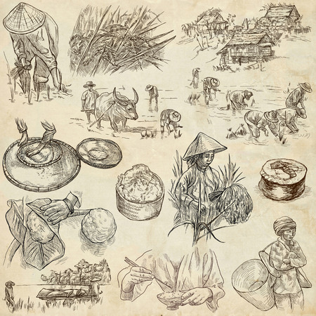 foodstuffs: Rice.Agriculture.Life of a farmer.Rice crop, set.Collection of an hand drawing illustrations.Pack of full sized hand drawn illustrations.Set of freehand sketches.Line art technique.Drawing on paper. Stock Photo