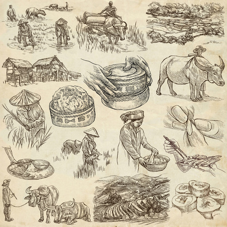 cultivation: Rice.Agriculture.Life of a farmer.Rice crop, set.Collection of an hand drawing illustrations.Pack of full sized hand drawn illustrations.Set of freehand sketches.Line art technique.Drawing on paper. Stock Photo