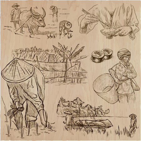 Agriculture - Life of a farmer. RICE crop. Collection of an hand drawn vector illustrations. Set of freehand sketches. Line art technique. Each sketch comprise a few layers of outlines.