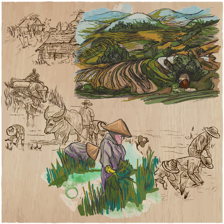 Agriculture - Life of a farmer. RICE crop. Collection of an hand drawn vector illustrations. Set of freehand sketches. Colored. Line art technique. Each sketch comprise a few layers of outlines.