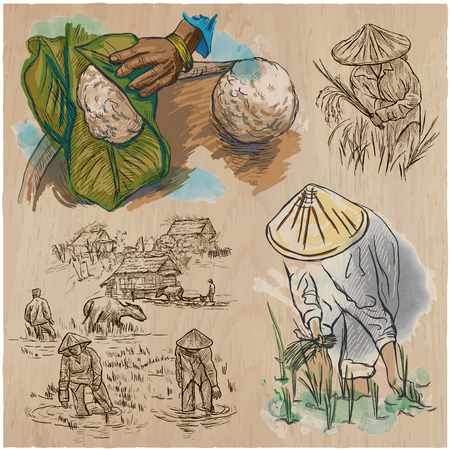 rice harvest: Agriculture - Life of a farmer. RICE crop. Collection of an hand drawn vector illustrations. Set of freehand sketches. Colored. Line art technique. Each sketch comprise a few layers of outlines.