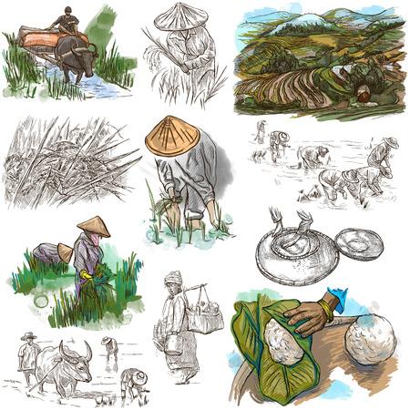Landbouw - Het leven van een boer. Rijstoogst. Het verzamelen van een hand tekenen illustraties. Set van de vrije hand schetsen. Gekleurde. Line art techniek. Tekening op een witte. Stockfoto