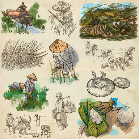 Agriculture - Life of a farmer. RICE crop. Collection of an hand drawing illustrations. Set of freehand sketches. Colored. Line art technique. Drawing on old paper.