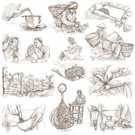 plucking: TEA. Agriculture. Life of a farmer. Tea Processing. Collection of an hand drawing illustrations. Pack of full sized hand drawn illustrations. Set of freehand sketches.