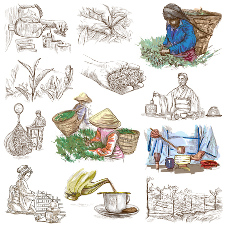 wilting: TEA. Agriculture. Life of a farmer. Tea Processing. Collection of an hand drawing illustrations. Pack of full sized hand drawn illustrations. Set of freehand sketches.