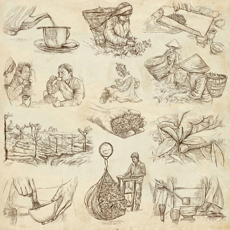 withering: TEA. Agriculture. Life of a farmer. Tea Processing. Collection of an hand drawing illustrations. Pack of full sized hand drawn illustrations. Set of freehand sketches.