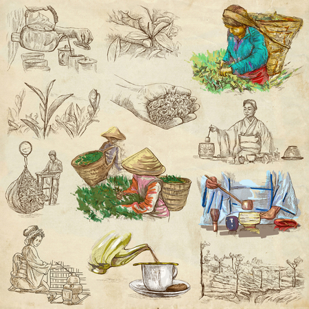 disruption: TEA. Agriculture. Life of a farmer. Tea Processing. Collection of an hand drawing illustrations. Pack of full sized hand drawn illustrations. Set of freehand sketches.
