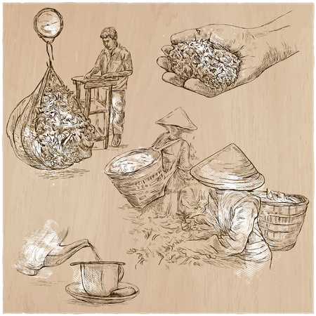 plucking: TEA. Agriculture. Life of a farmer. Tea harvesting and processing. Collection of an hand drawing illustrations. Pack of an hand drawn vector illustrations. Set of freehand sketches. Illustration
