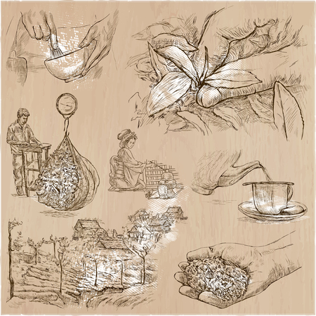 rural india: TEA. Agriculture. Life of a farmer. Tea harvesting and processing. Collection of an hand drawing illustrations. Pack of an hand drawn vector illustrations. Set of freehand sketches. Illustration