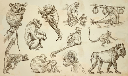 comprise: MONKEYS around the World. Collection of an hand drawn vector illustrations. Freehand sketches. Line art. Each drawing comprise of a few layers of lines. Colored background is isolated. Easy editable. Illustration
