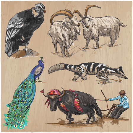 few: Animals around the World. Collection of an hand drawn vector illustrations. Freehand sketches. Colored line art. Each drawing comprise of a few layers of outlines. Background texture is separated. Illustration