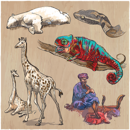 Animals around the World. Collection of an hand drawn vector illustrations. Freehand sketches. Colored line art. Each drawing comprise of a few layers of outlines. Background texture is separated. Illustration