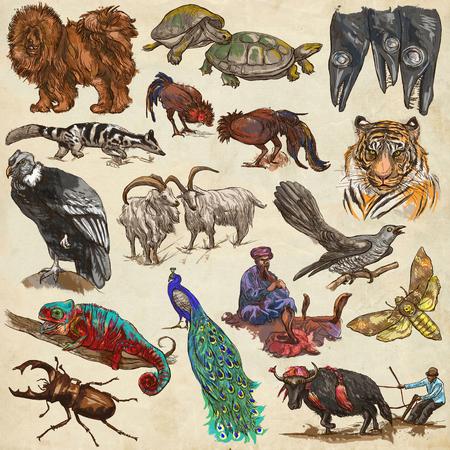 Les animaux autour du monde. Collection d'illustrations dessinées à la main. Des croquis à main levée colorés. Line art. Dessins sur papier ancien. Banque d'images - 77790429