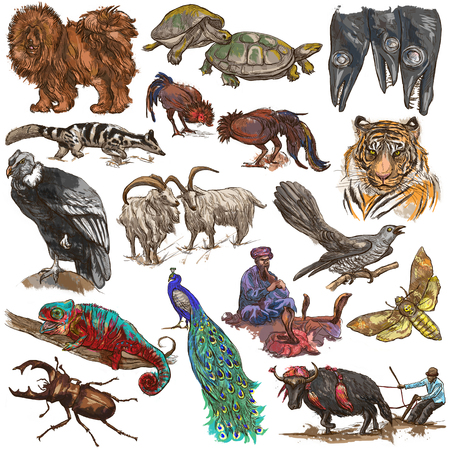 Animals around the World. Collection of an hand drawn illustrations. Colored freehand sketches. Line art. Drawings on white, isolated.