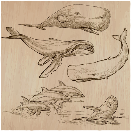 cetaceans: Animals around the World - CETACEANS. Collection of an hand drawn vector illustrations. Freehand sketches. Line art. Each drawing comprise of a few layers of outlines. Background is isolated. Illustration