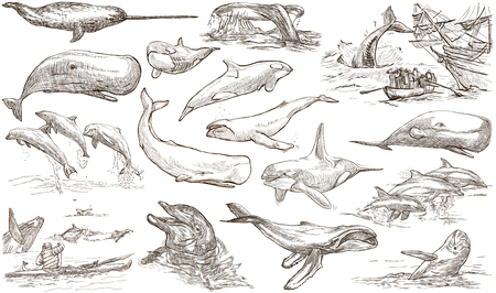 cetacea: Animals around the World - CETACEANS, Cetacea. Collection of an hand drawn illustrations. Colored freehand sketches. Line art. Drawings on white background, isolated.