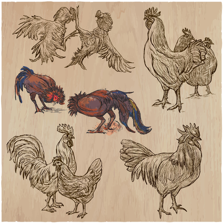 Farm animals - POULTRY, roosters and hen. Collection of an hand drawn vector illustrations. Freehand sketches. Line art. Each drawing comprise of a few layers of outlines. Colored background is isolated. Ilustrace