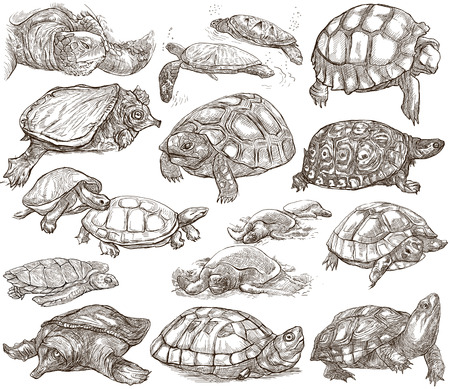 Animals around the World - TURTLES and Tortoises. Collection of an hand drawn illustrations. Colored freehand sketches. Line art. Drawings on white, isolated.