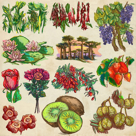 lycium: FLOWERS and Trees around the World. Collection of an hand drawn illustrations. Colored freehand sketches. Line art. Drawings on old paper. Stock Photo