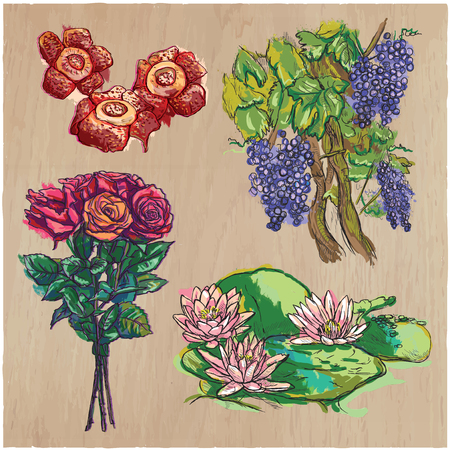comprise: FLOWERS around the World. Collection of an hand drawn vector illustrations. Freehand sketches. Colored line art. Each drawing comprise of a few layers of outlines. Background, wood, is isolated.