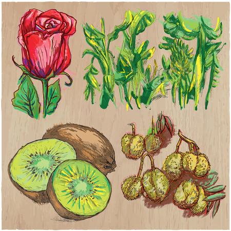 FLOWERS around the World. Collection of an hand drawn vector illustrations. Freehand sketches. Colored line art. Each drawing comprise of a few layers of outlines. Background, wood, is isolated.