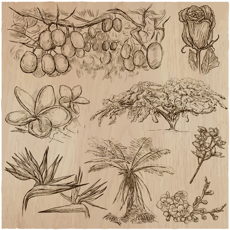 FLOWERS around the World. Collection of an hand drawn vector illustrations. Freehand sketches. Line art. Each drawing comprise of a few layers of outlines. Background, wood, is isolated.