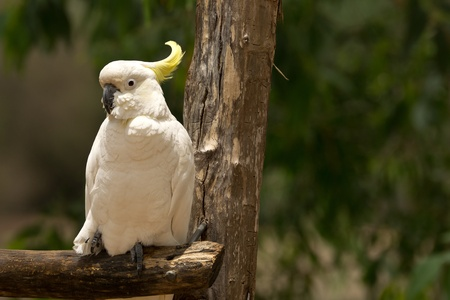 Cockatoo on a branch photo