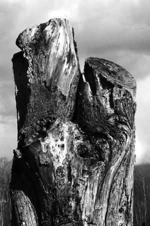 truncated: Stem of truncated tree. Stock Photo
