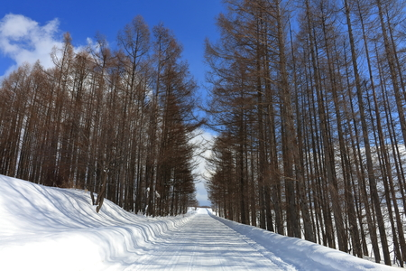 treelined: Tree-lined streets of snow Stock Photo
